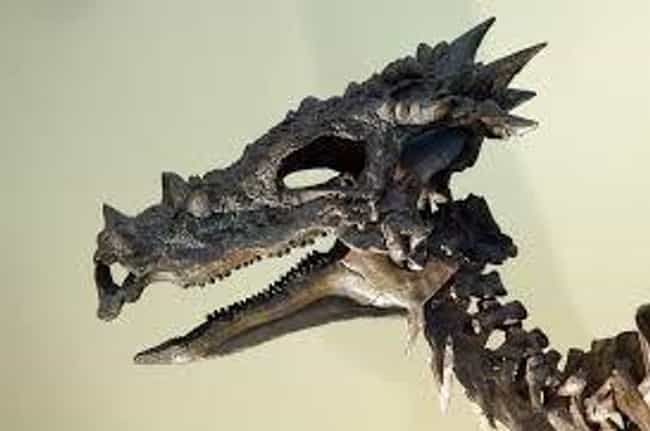 The Amazing Discovery Was Made... is listed (or ranked) 4 on the list Meet Dracorex Hogwartsia, The Most Amazing Dinosaur You've Never Heard Of