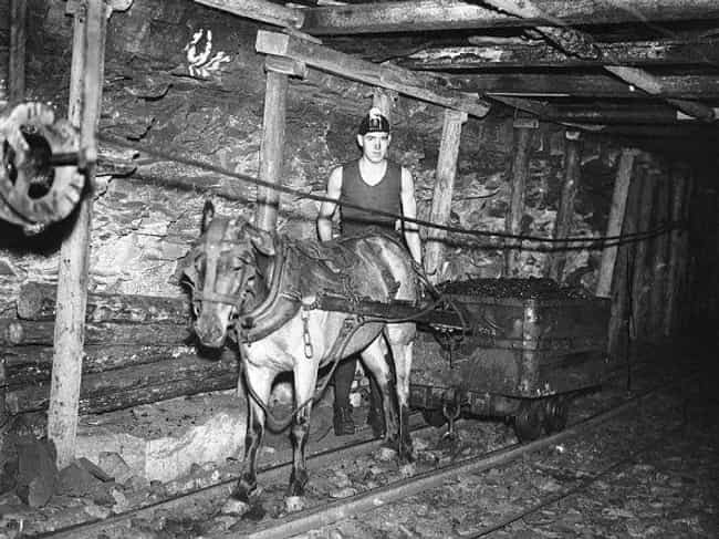 A Coal Miner And His Wor... is listed (or ranked) 3 on the list 35 Photos Of Coal Miners That Will Make You Feel Like You're Underground