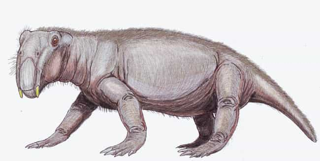 They Didn't Just Survive, ... is listed (or ranked) 2 on the list Lystrosaurus, The Prehistoric Animal That Took Over The World