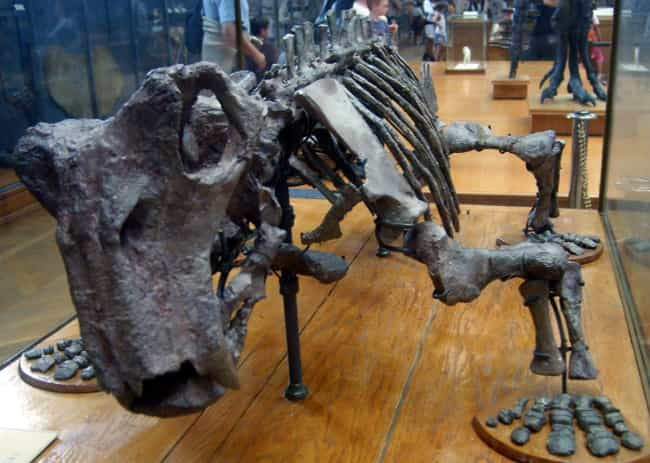 Strong Front Legs And Unique F... is listed (or ranked) 4 on the list Lystrosaurus, The Prehistoric Animal That Took Over The World