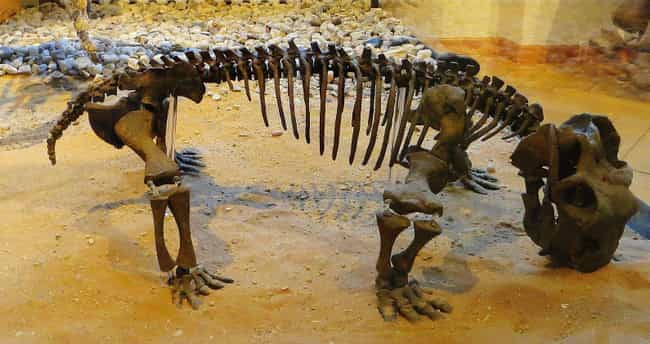 Shortened Lifespans And Rapid ... is listed (or ranked) 3 on the list Lystrosaurus, The Prehistoric Animal That Took Over The World
