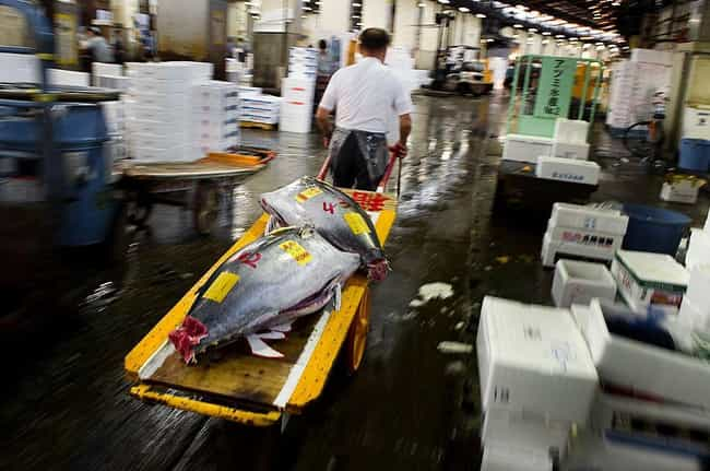 Giant Tuna Distributed T... is listed (or ranked) 3 on the list Super Nifty Pictures From The Tsukiji Fish Market