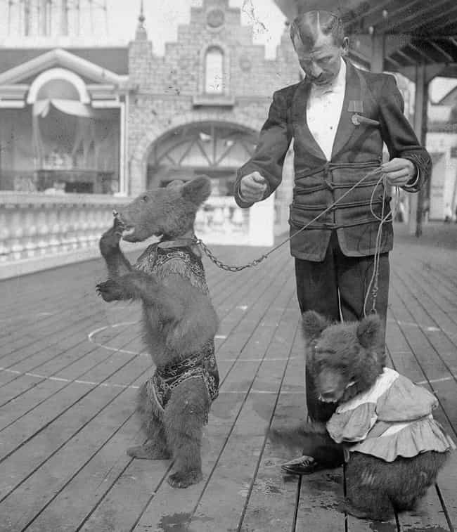 The Roosevelt Bears At Coney I... is listed (or ranked) 4 on the list 28 Historical Pictures Of New York's Famous Coney Island