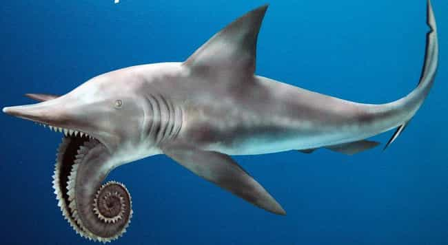 Helicoprion, The Spiral-Mouthed Killer