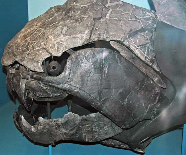 Dunkleosteus, An Armored Death... is listed (or ranked) 1 on the list The Most Horrifying Sea Monsters To Ever Terrorize The Ocean