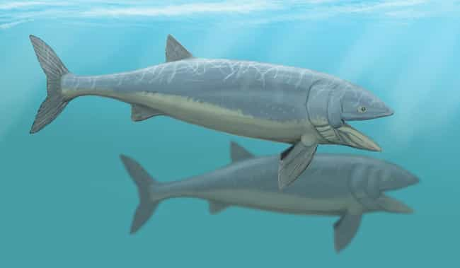 Leedsichthys, The Largest Fish Ever