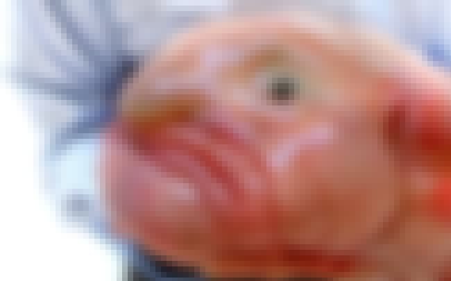 Could This Blobfish Look Any M... is listed (or ranked) 2 on the list 17 Animals With Eerily Human Physical Characteristics