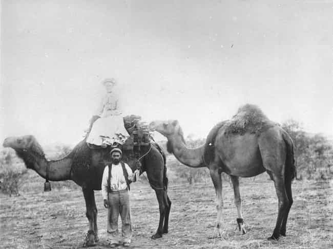 Congress Set Aside $30,0... is listed (or ranked) 3 on the list Camels Once Roamed The American Southwest - And One Inspired A Terrifying Arizona Legend