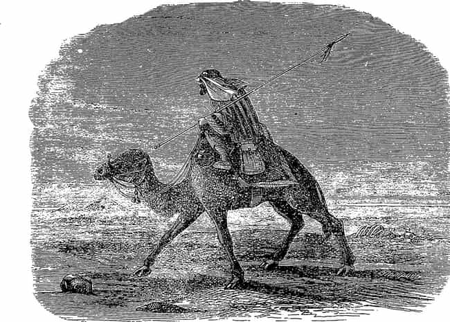 The Red Ghost Rider's Id... is listed (or ranked) 2 on the list Camels Once Roamed The American Southwest - And One Inspired A Terrifying Arizona Legend