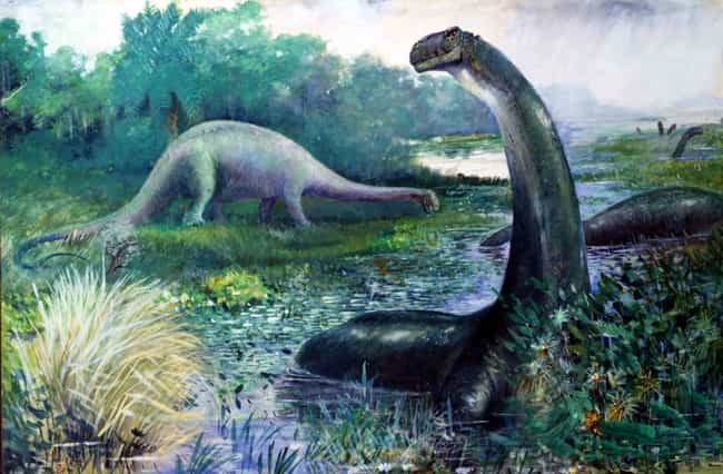 Brontosaurus, The Famous... is listed (or ranked) 4 on the list 12 Animals That Were Actually Hoaxes