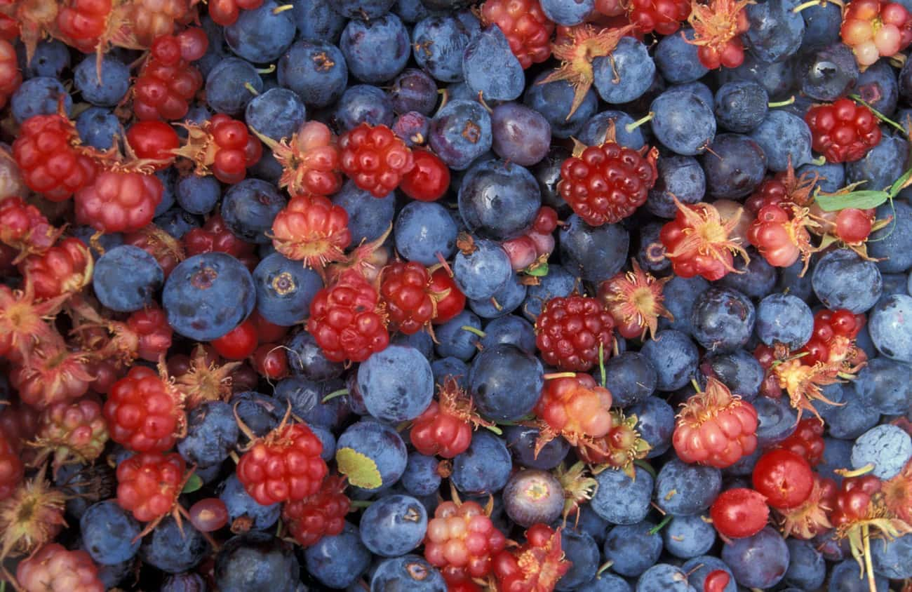 Unripe Mulberries Are Ripe For is listed (or ranked) 1 on the list Foods You Never Knew Could Make You Hallucinate