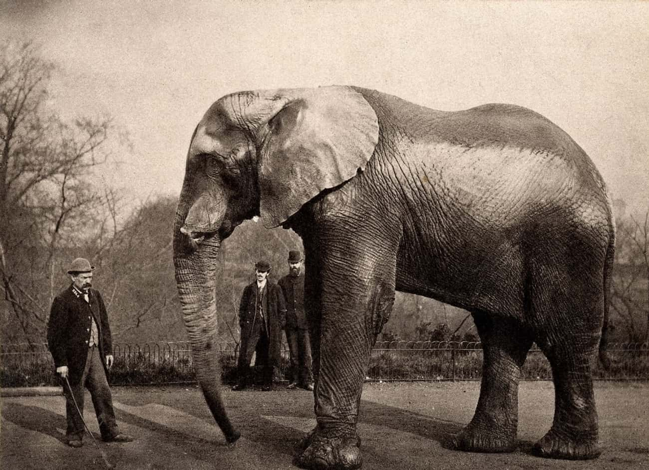 He Marched 21 Elephants And 17 Camels Across The Brooklyn Bridge