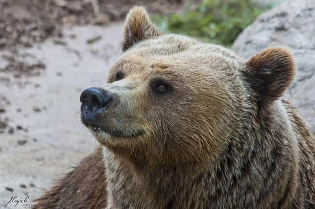 Bear Novel is listed (or ranked) 1 on the list 13 Things You Should Never Google: Nature Edition