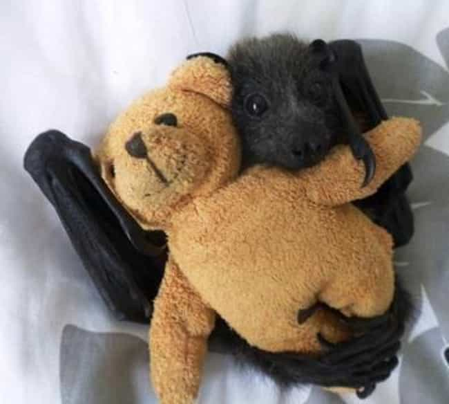 Just Chillin' With My Home... is listed (or ranked) 3 on the list 24 Bats That Prove They're Adorable Instead Of Terrifying