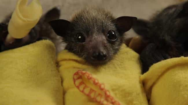 Where My Bottle At? is listed (or ranked) 3 on the list 24 Bats That Prove They're Adorable Instead Of Terrifying