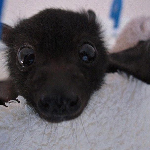 Random Bats That Prove They're Adorable Instead Of Terrifying