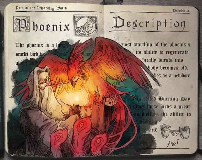 Phoenix is listed (or ranked) 1 on the list This Artist Creates Awesome Harry Potter Watercolor Fan Art