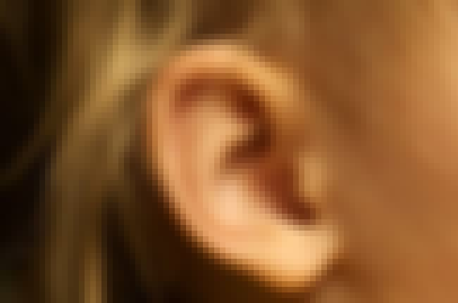 Ear Spider Infestation is listed (or ranked) 2 on the list 20 Things You Should Never Google - Spider Edition