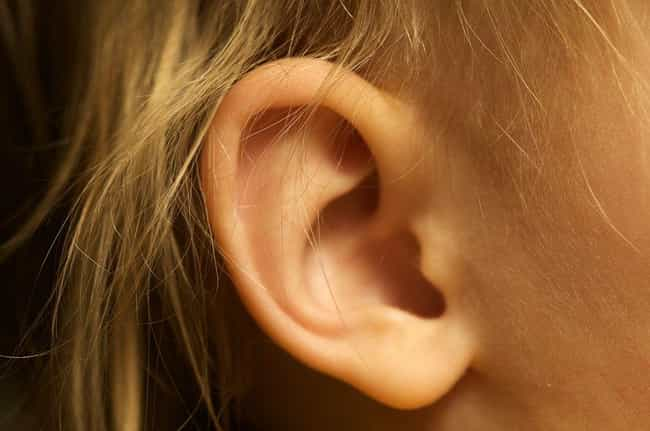 Ear Spider Infestation is listed (or ranked) 1 on the list 20 Things You Should Never Google - Spider Edition