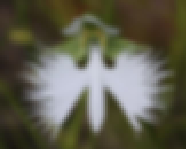 The White Egret Flower Looks L... is listed (or ranked) 4 on the list 18 Plants That Look Just Like Animals