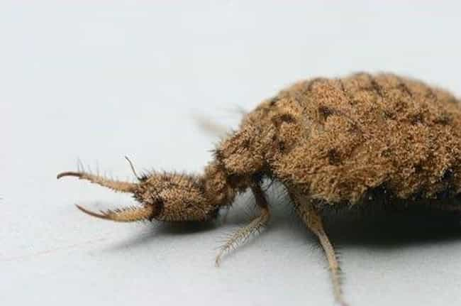 Antlion is listed (or ranked) 4 on the list 13 Creatures With The Most Horrifying Mandibles