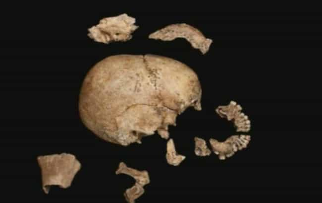 Experts Don't Know If Jane... is listed (or ranked) 4 on the list New Evidence Proves Starving Settlers At Jamestown Cannibalized A Teenage Girl