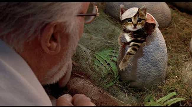 If I Fits, I Sits is listed (or ranked) 4 on the list Jurassic Park's Dinosaurs Replaced With Cats Is An Internet Masterpiece
