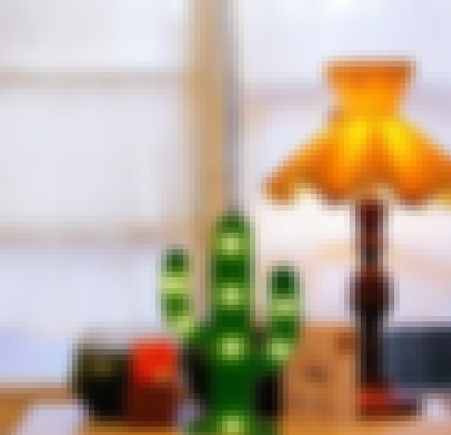 This Cactus Lamp Is Both Cute ... is listed (or ranked) 4 on the list 20 Of The Best Things To Replace Your Dying Plants With