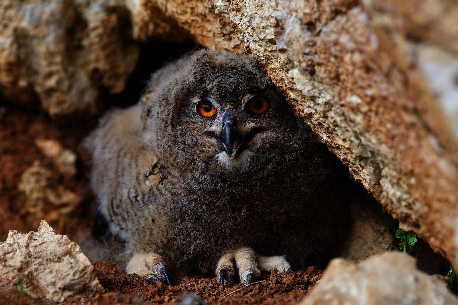 Random Scary Owl Photos That'll Definitely Give You Chills