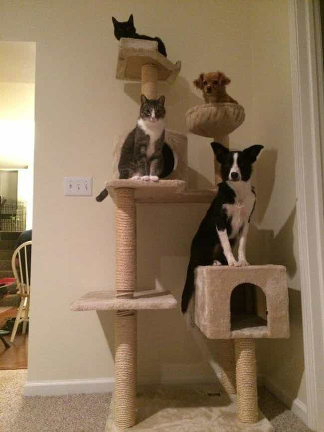 Who Dares Disturb Our Co-Speci... is listed (or ranked) 3 on the list 22 Dogs Who Were Clearly Raised By Cats