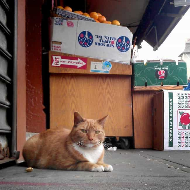 Cats Keep Bodegas Pest F... is listed (or ranked) 1 on the list 11 Ingenious Ways Animals Have Majorly Helped Humans Throughout History