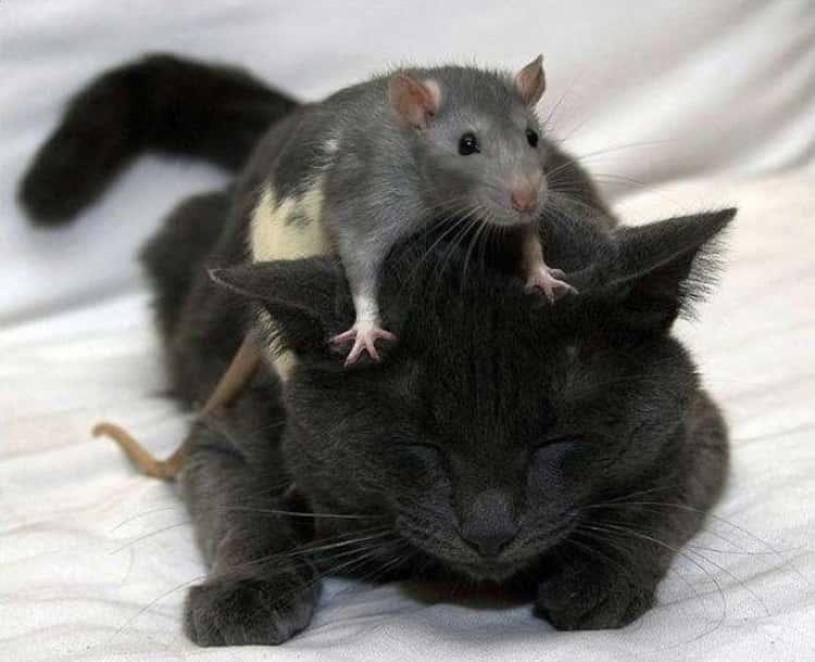 Unconventional Friendship