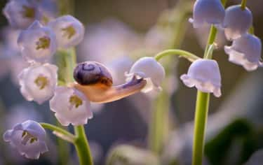 Anybody Home? is listed (or ranked) 2 on the list 15 Times That Snails Redefined Adorable For The Animal Kingdom