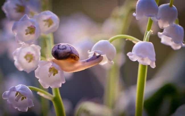Anybody Home? is listed (or ranked) 3 on the list 15 Times That Snails Redefined Adorable For The Animal Kingdom