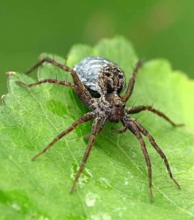 Spiders Make Really Good... is listed (or ranked) 3 on the list Zombie Spiders Are Eating Brains Of Animals Three Times Their Size