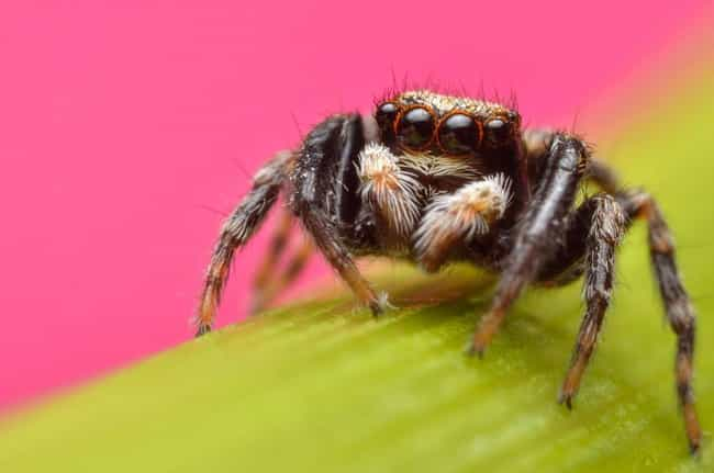 While This Is The First ... is listed (or ranked) 4 on the list Zombie Spiders Are Eating Brains Of Animals Three Times Their Size