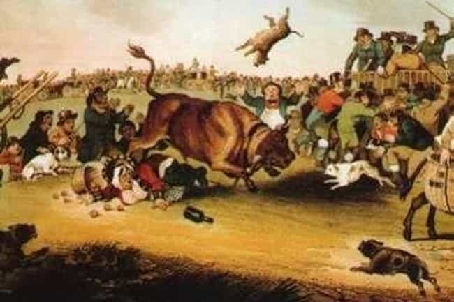 "Bull-Baiting, A Popular ... is listed (or ranked) 2 on the list The History of the Name ""Bulldog"" is Far More Horrifying Than You Can Even Imagine"