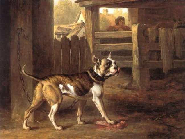"The Dogs Were Bred To Be... is listed (or ranked) 4 on the list The History of the Name ""Bulldog"" is Far More Horrifying Than You Can Even Imagine"