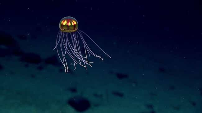 The Mariana Trench Is De... is listed (or ranked) 3 on the list These Horrifyingly Deep Holes Might Just Be The Portal To Hell