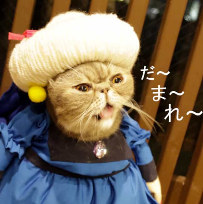 Furrball Yubaba - Spirit... is listed (or ranked) 4 on the list 14 Cats Whose Anime Cosplay Is Better Than Yours