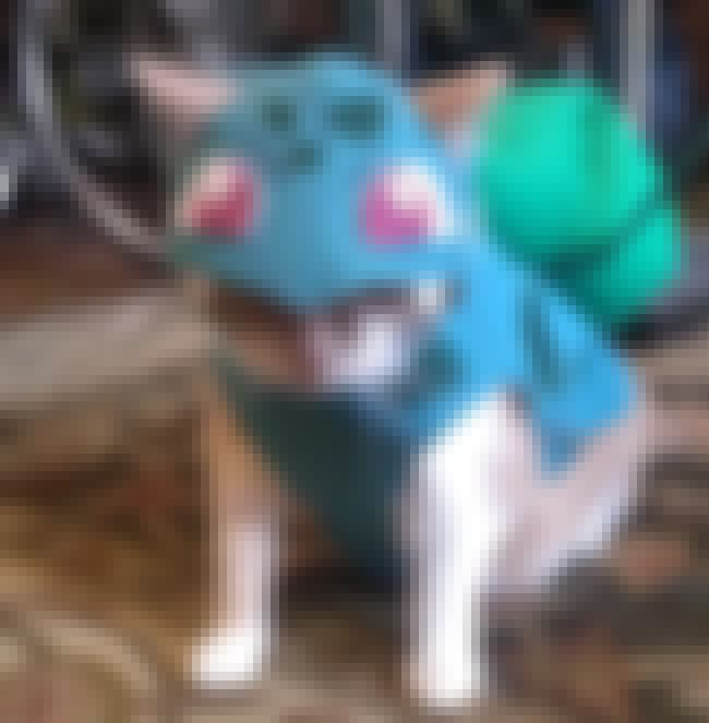 I Choose You, Bulbacat - Pokem... is listed (or ranked) 1 on the list 14 Cats Whose Anime Cosplay Is Better Than Yours