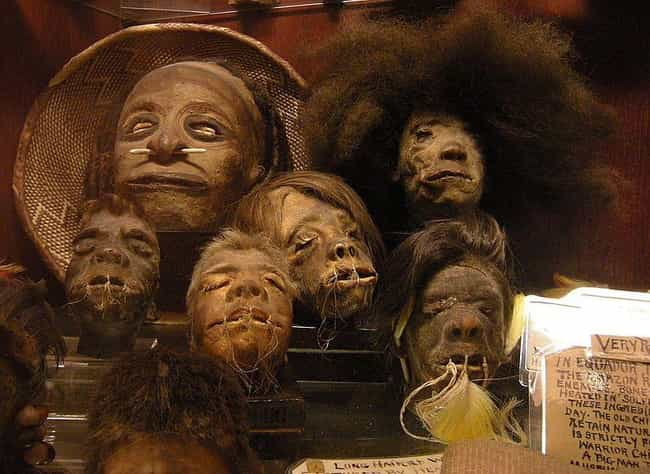 Shrunken Heads Are Actua... is listed (or ranked) 1 on the list How Are Shrunken Heads Made And Are They Really Human?