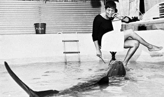 Margaret Howe Lovatt Moved Int... is listed (or ranked) 3 on the list How A Scientific Experiment Led To Sexual Encounters Between A Woman And A Dolphin