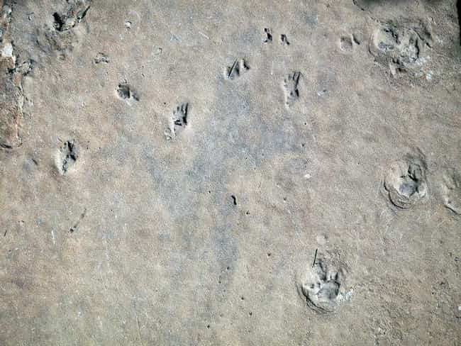 The Footprint Seen 'Round The ... is listed (or ranked) 2 on the list Uh Oh... The Theory That Humans Originated In Africa Is Rapidly Falling Apart