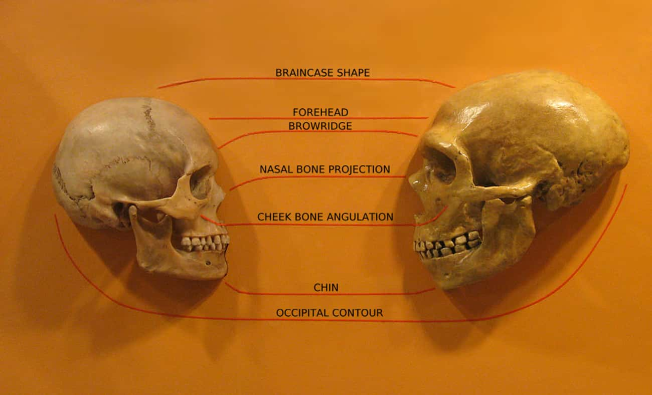 Let's Get The Science Jargon O is listed (or ranked) 1 on the list Uh Oh... The Theory That Humans Originated In Africa Is Rapidly Falling Apart