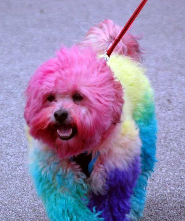 12 Reasons Why Its Horrible To Dye Your Dogs Fur