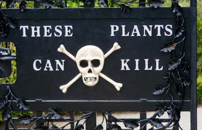 It's Home To Over A Hundre... is listed (or ranked) 1 on the list Inside The Deadliest Garden In The World, Where Even Breathing Can Kill You
