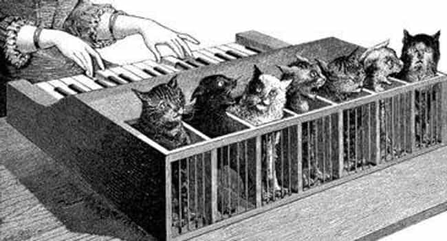 The Idea Came About As A... is listed (or ranked) 1 on the list This Historical Instrument That Made Music By Torturing Kittens Thankfully Never Took Off