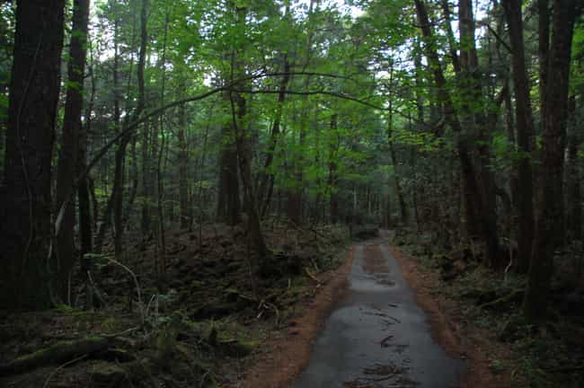 Aokigahara – The Suicide Fores... is listed (or ranked) 1 on the list These Are The Creepiest Natural Wonders You Can Actually Visit