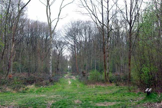The Screaming Dering Woods Of ... is listed (or ranked) 3 on the list These Are The Creepiest Natural Wonders You Can Actually Visit